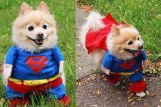 Superman Halloween Dog Costume W Cap Superhero Very Cute Size L For Small Dog