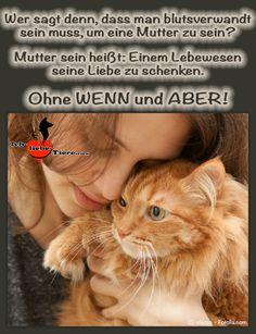 Wer sagt denn, dass man blutsverwandt sein muss, um eine Mutter zu sein? Mutter sein heißt: Einem Lebewesen seine Liebe zu schenken. Ohne WENN und ABER! >> http://www.ich-liebe-tiere.com/ <<