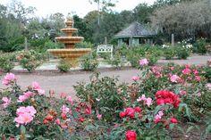 The rose garden at Orlando's Harry P. Leu Gardens in January.