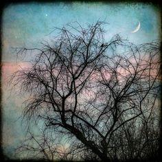 Bird in tree, moon