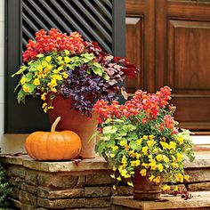 Vibrant Fall Colors Combine the season's hottest hues in a vibrant mix of 'Snapshot Orange' snapdragons, 'Purple Pixie' loropetalum, and bright 'Penny Clear Yellow' violas. Tuck in the showy foliage of 'Sparkling Burgundy' heuchera to complete the loo Southern Living, Container Plants, Container Gardening, Fall Containers, Pot Jardin, Fall Planters, Outdoor Flowers, Heuchera, Autumn Garden