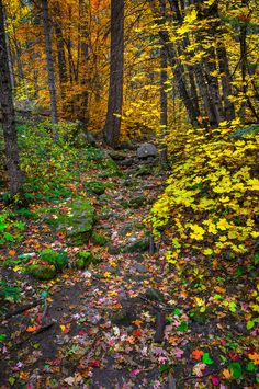 Fall in the Fork...West Fork Trail...Oak Creek Canyon...Sedona, AZ