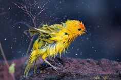 birds of a feather: Photo Pretty Birds, Love Birds, Beautiful Birds, Beautiful Things, Canario Da Terra, Wow Photo, Hope Is The Thing With Feathers, Different Birds, Tiny Bird