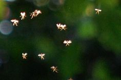 Man Claims To Have Photographed Actual Fairies Could these tiny winged creatures be real fairies? :)Could these tiny winged creatures be real fairies?