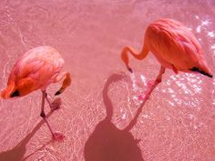 Flamingo Pink- Pink-  July is National Cleft & Craniofacial Awareness & Prevention Month &  October is Breast Cancer  Awareness Month