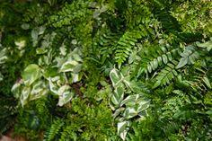 Tropical U0026 Succulent Living Wall | Vertical Garden Solutions | Green Walls,  Vertical Landscaping, Vertical Gardens, Living Walls | Pinterest | Garden  ...