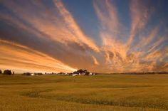 iowa cornfield - Bing Images