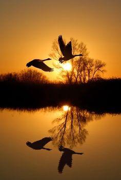 HAMBURG - Spiegelbild zweier Wildgänse über einem See