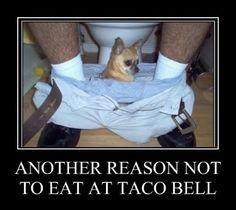 More Taco Bell Anyone?