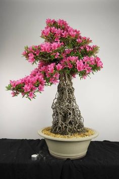 1800flowers jade bonsai