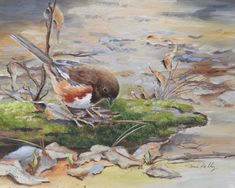 Eastern Towhee - acrylic by Toni Kelly Bird Paintings, Still Life, Birds, Watercolor, Nature, Art, Paintings Of Birds, Pen And Wash, Art Background