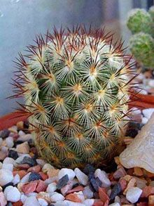 cactus | A Guide to the Miraculous Cactus World