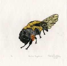 Bombus Impatiens Bumblebee Linocut by minouette on Etsy, $28.00