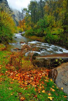 Raining is a photograph by Guido Montanes Castillo. Raining, Autumn leaves Sierra Nevada National Park is in the set of the Betic, namely Penibetic systems. It is located in Andalusia, Spain, spreading to the central-east of the province of Granada and part of the southwest of the province of Almeria. Source fineartamerica.com