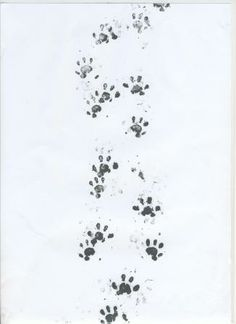 Footprint tunnels are a new, non-invasive tool to look for the presence of mammals in a habitat by identifying their footprints. Mammals walk over ink-pads to reach bait inside, and leave their footprints on special paper as they do so. It's a great survey for the whole family to find out what passes through your garden in the night!