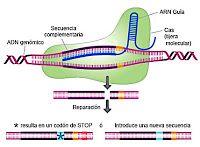 La Ciencia por Gusto: Tijeras moleculares contra el VIH