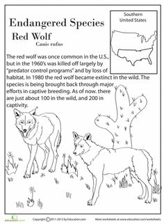 Worksheets: Endangered Species: Red Wolf