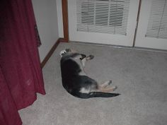 Lexi sleeping baby !