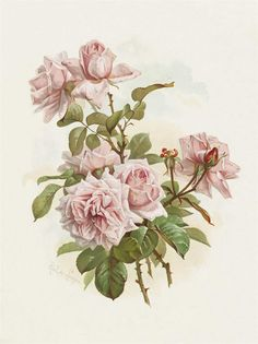 Paul de Longpre 1855-1911 La France Roses.......One of my most favorite rose artists.