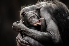 One Mother's Love  Graham McGeorge