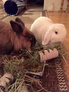 Hay there!! Wonna taste?? The Bunny Brothers Duncan and Dexter on D&D by Inger Johanne :)