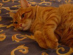 Giz kitty's favorite position.