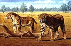 8 Animais Extintos Com Possibilidades de Ser Ressuscitados!