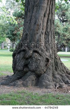 old human faces | Wise Old Tree With Human Face Stock Photo 44794249 : Shutterstock