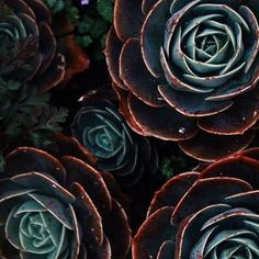 ∙ PLEASE WELCOME ∙ ⠀⠀⠀⠀ ⠀⠀⠀Your World of Plants _______________________________ ✔️ IMAGE BY: @susii.joia _______________________________ ✔️ ADD: @plantsinfocus _______________________________ ✔️ TAG: #plantsinfocus _______________________________ ✔️ MORE TAGS: #greenhouse #glasshouse #botanicalpickmeup #urbanjunglebloggers #urbanjungle #vscoplants #plantspo #plantlife #botanical #instaplant #plantstagram #jungal