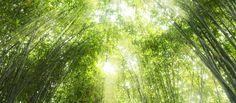 Cuento del bambú