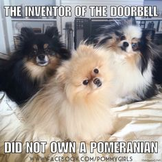 The inventor of the doorbell did not own a Pomeranian!