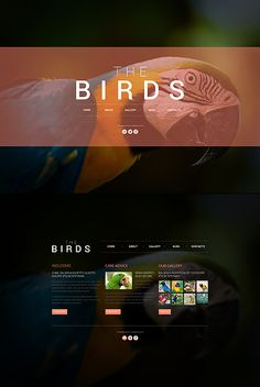 JavaScript Based #template // Regular price: $67 // Unique price: $4100 // Sources available: .HTML,  .PSD #JavaScript #Animals #Pets #Birds