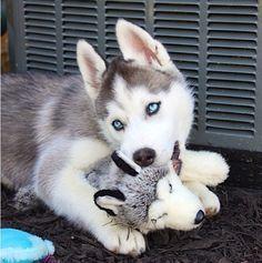 Nali - Nali bear | VSPETS - Internet Pet Competition, Pet Photo Contest | Enter your pet at www.VSPETS.com