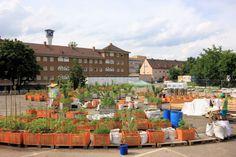 Stadtgarten Nürnberg, ein gemeinschaftlicher Garten in Nürnberg Eberhardshof