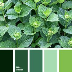 Amazing, fresh composition in truly natural colors. Rich color gamma where shades of green mixture up. These colors are filled with the beauty of forest, j.