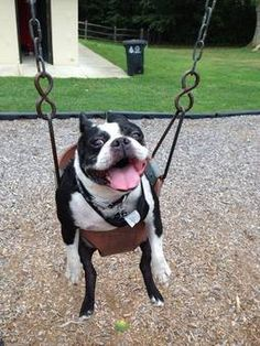 Weee, I love to swing!