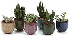 How to care for an Orchid Cactus   Houseplant 411 - How to Identify and Care for Houseplants