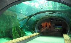 California Academy of Sciences Aquarium. A great place for a family day trip in San Francisco.