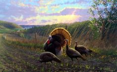 Michael Sieve Golden Fan Club- Wild Turkeys
