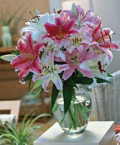 The Fragrant Oriental Lily Mixture - Oriental Lilies - Hardy Lilies - Flower Bulb Index