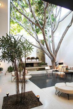 Colores neutros y un majestuoso árbol para este elegante patio.