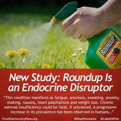 Study shows shortcomings of regulatory system The glyphosate-based herbicide Roundup is an endocrine (hormone) disruptor in adult male rats, a new study shows. http://www.fooddemocracynow.org/blog/2015/aug/19 #roundup #ag #food #stopmonsanto