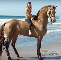 Very beautiful horse on the beach, what a profile.