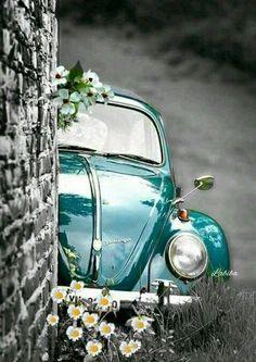 I need this outstanding volkswagen beetle Bmw Autos, Vw Vintage, Cute Cars, Jolie Photo, Vw Beetles, Volkswagen Bus, Vw Camper, Volkswagen Beetle Vintage, Volkswagen Transporter