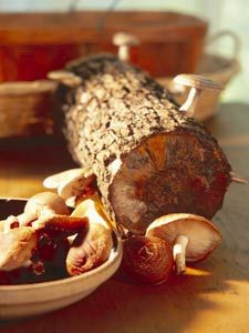 The basics on growing mushrooms.Article by author and garden guru Charlie Nardozzi, on the National Gardening Assoc. website.