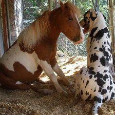 Dog & Horse oh dear this is soo cute!!!!!
