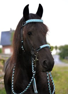 Bridons - parfois tout à fait normal - MH.Flechtdesign main unique pour cheval et chien!
