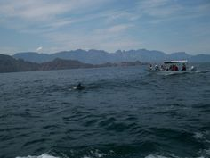 It kind of looks like they're making a huge thing over 1 dolphin.  We estimated there were about 50 there with us.