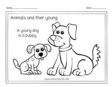 Baby Animals Coloring Page Preschool Worksheets A Young Dog Is