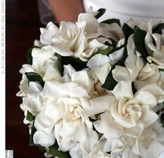 A wedding bouquet of glorious white gardenias. Just like my own wedding bouquet. The gardenias browned the instant they hit the frigid air outside. Gardenia Wedding Bouquets, Gardenia Bouquet, Calla Lily Wedding Flowers, Floral Wedding, Bridal Bouquets, Bridal Flowers, Magnolia Bouquet, Magnolia Wedding, Boutonnieres